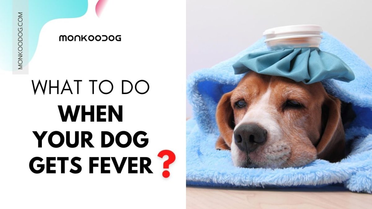 Fever in Dogs: Causes, Symptoms, And Treatment