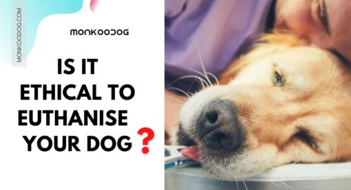 Is It Ethical to Euthanize Your Dog?