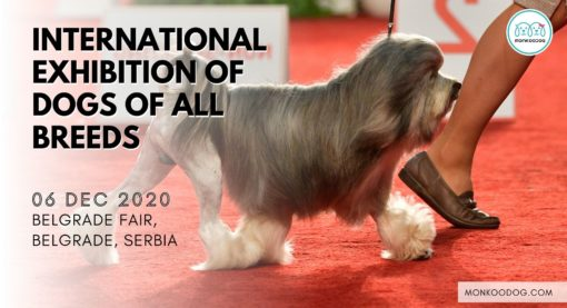 International Exhibition of Dogs of All Breeds