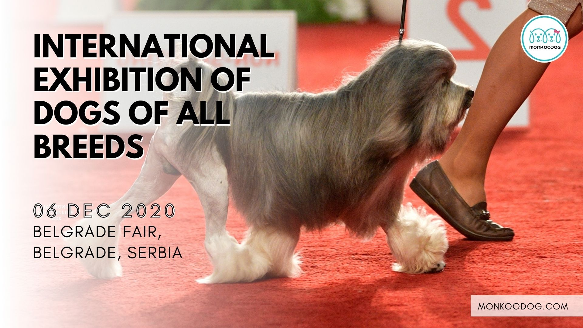 International Exhibition of Dogs of All Breeds dog event