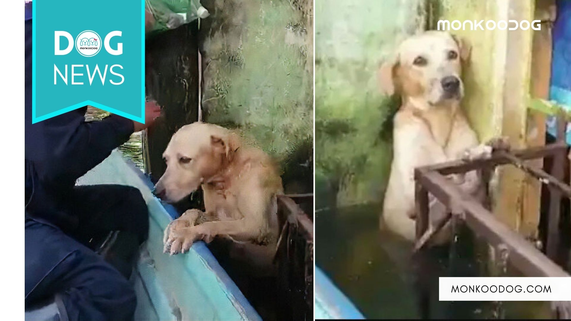 Internet Can't Get Over This Dog Being Rescued By SEMAR In The Mexican Flood