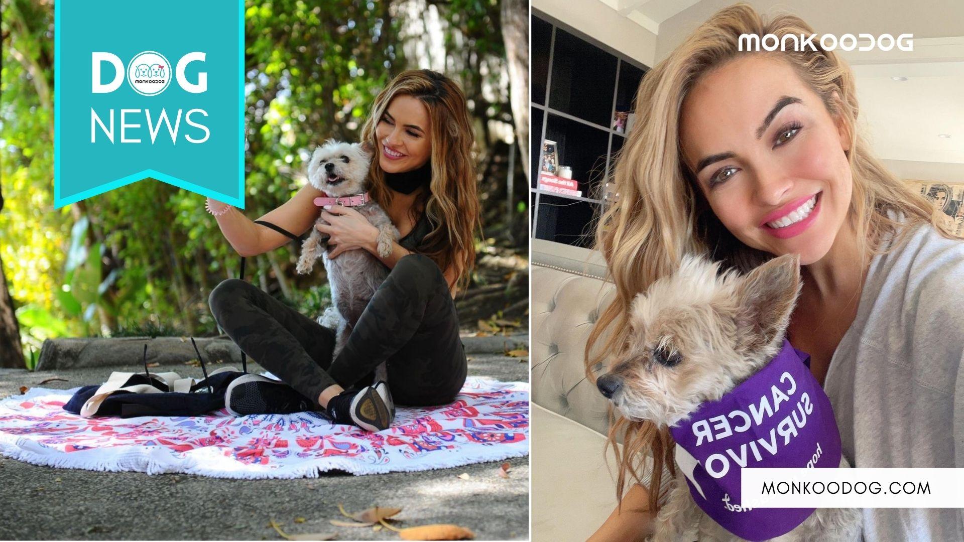 Meet Chrishell Stause's Cancer Survivor Dog, Gracie