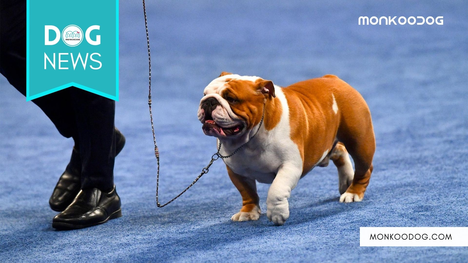 NBC National Dog Show 2020- All You Need To Know