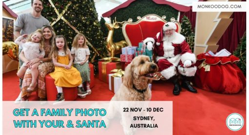 Pet Photography: Get Santa photos with your dog & whole family