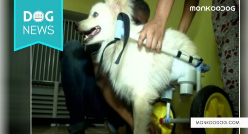 TamilNadu Dog Gets His Owner Design Wheelchair Specially For Him