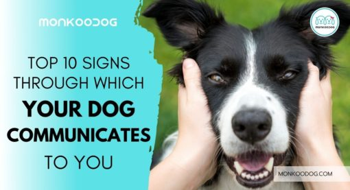 10 Signs Through Which Your Dog Communicates To You
