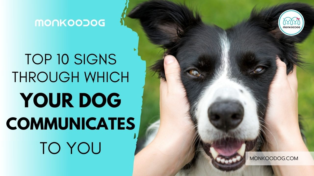 Top 10 Signs of Dog Communication