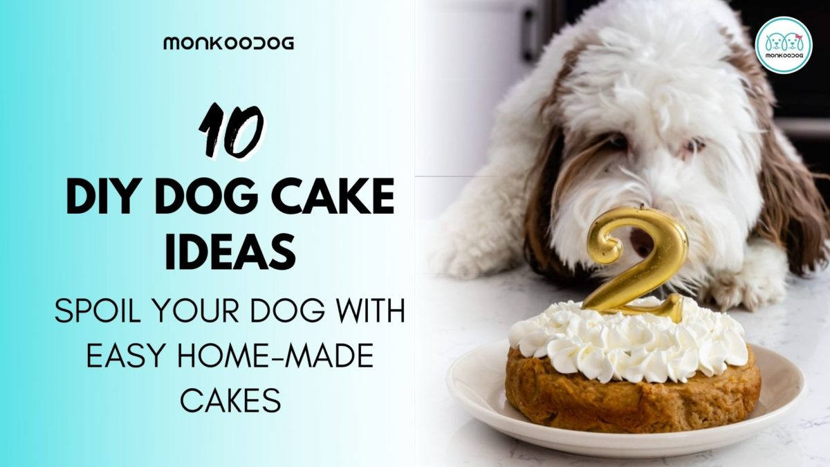Top 7 DIY Dog Cake Ideas That You Can Try At Home