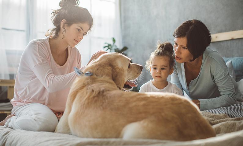 Euthanize Your Dog