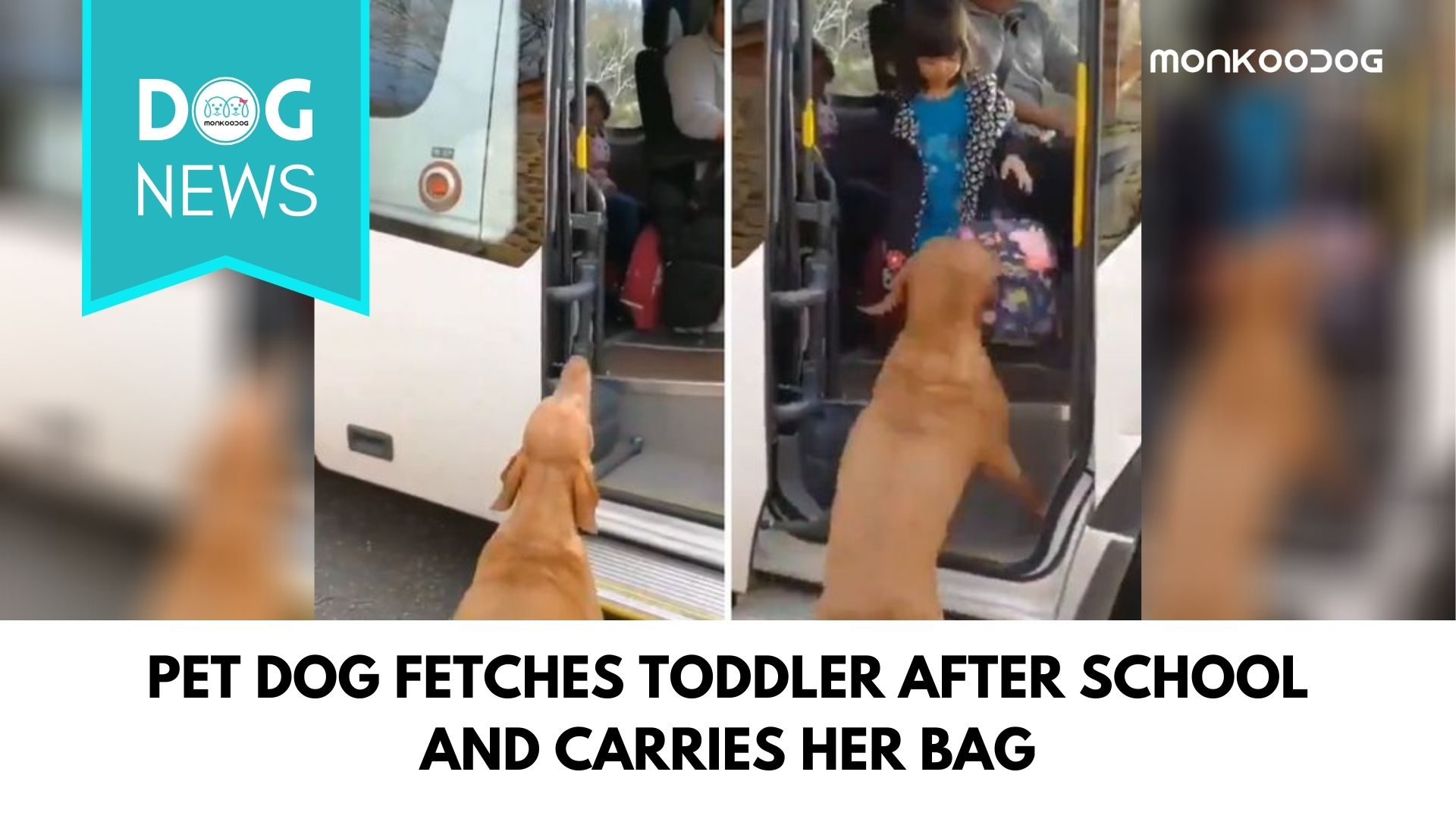 Video Of Pet Dog Taking Toddler Up To The School Bus While Carrying The School Bag Goes Viral