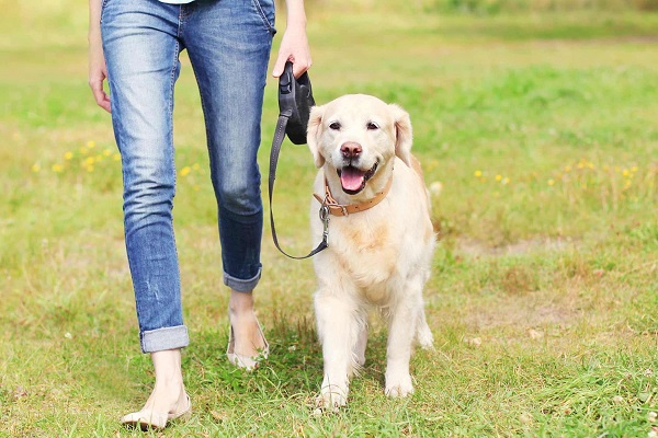 why-is-my-dog-pain-when-walking