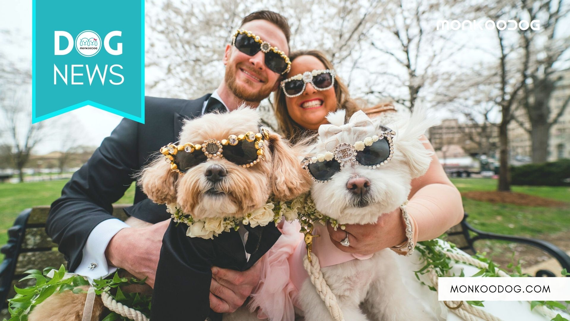5 Pawdorable Videos Of Dogs and Weddings To Make Your Day