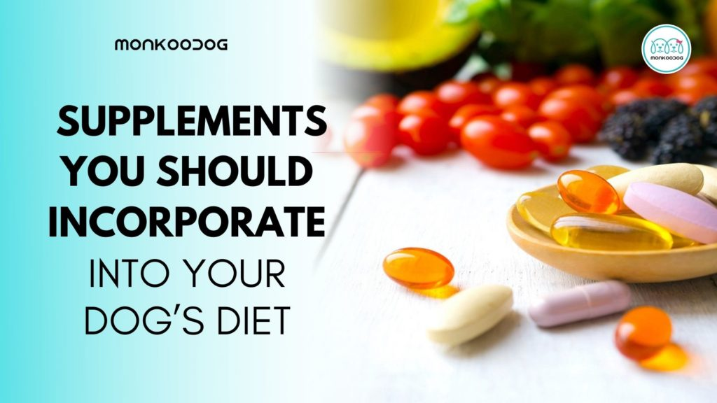 5 Supplements You Should Incorporate into Your Dog's Diet