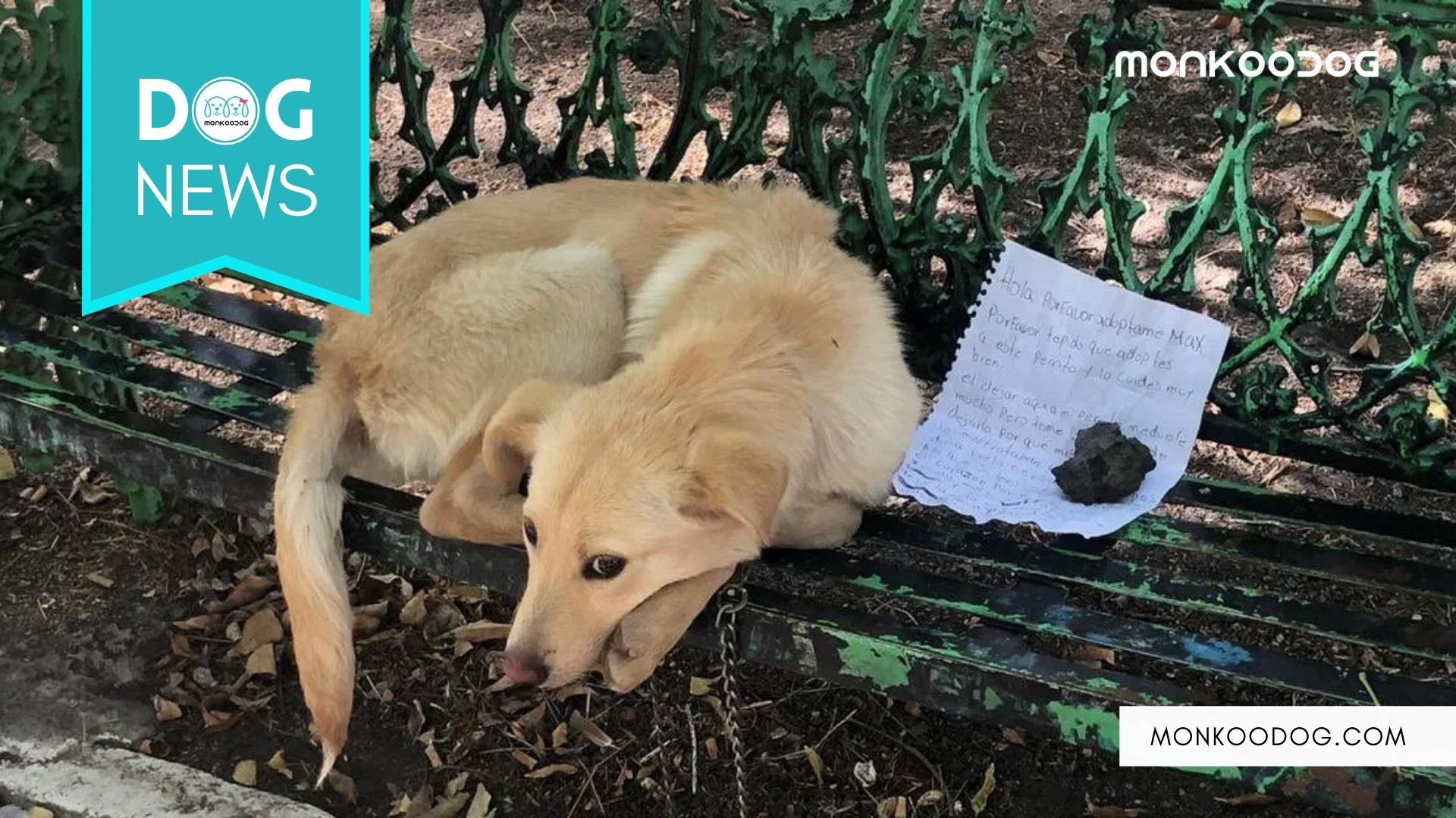 Abandoned Dog In Mexico Finds A New Owner After His Past Owner Left A Heartfelt Note With Him