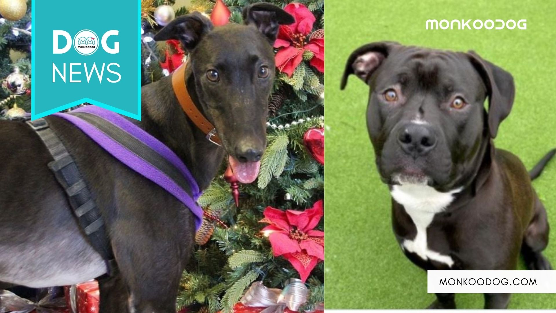 Animal Shelter Dogs Asked For A Forever Home From Santa This Christmas.