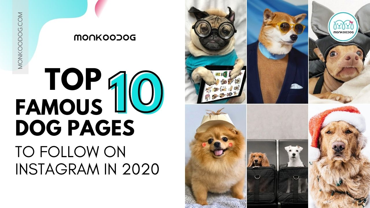 Best 10 Dog Pages To Follow On Instagram in 2020
