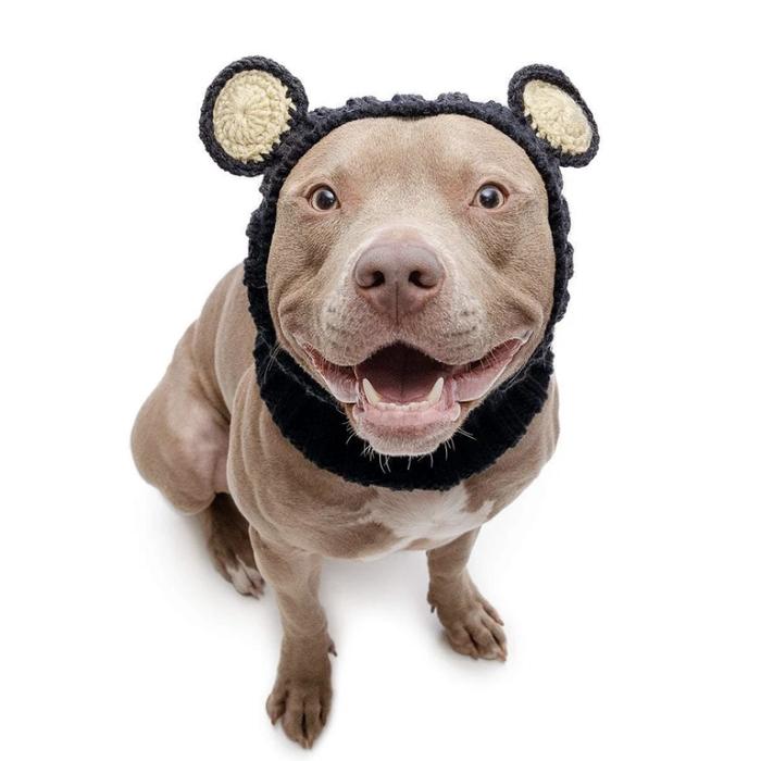 Dog Snood
