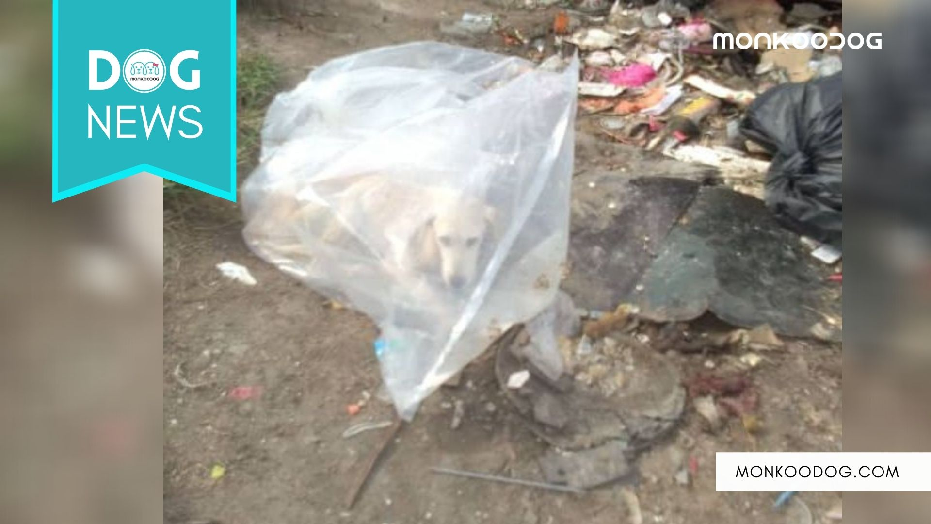 Dog Stranded by Owners In A Plastic Bag to Die