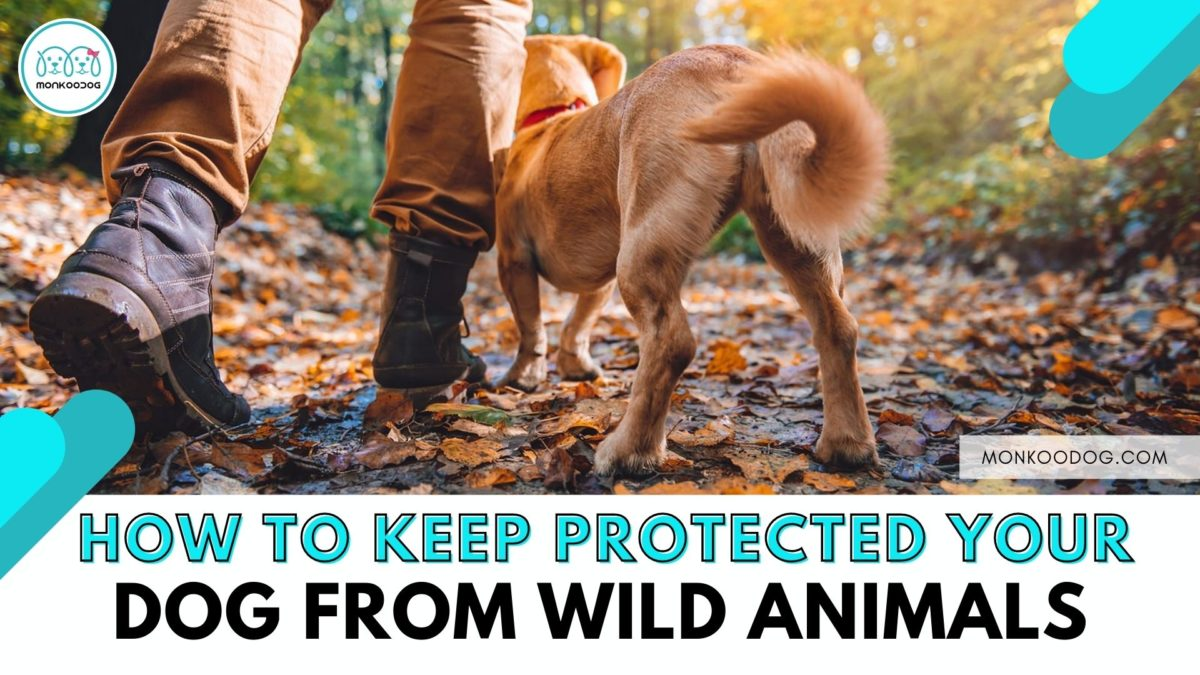 Dog Training Tips That Can Protect Your Furry Friend from Wild Animals