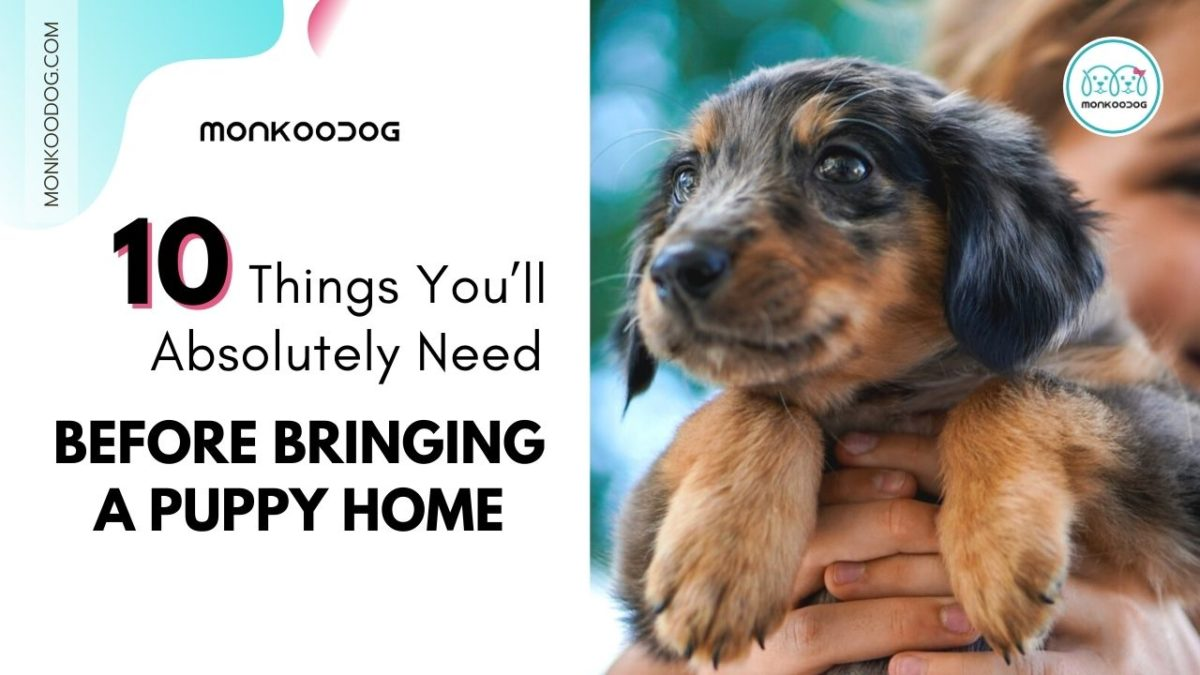 Getting Your First Dog? 10 Things You'll Absolutely Need Before Bring It Home