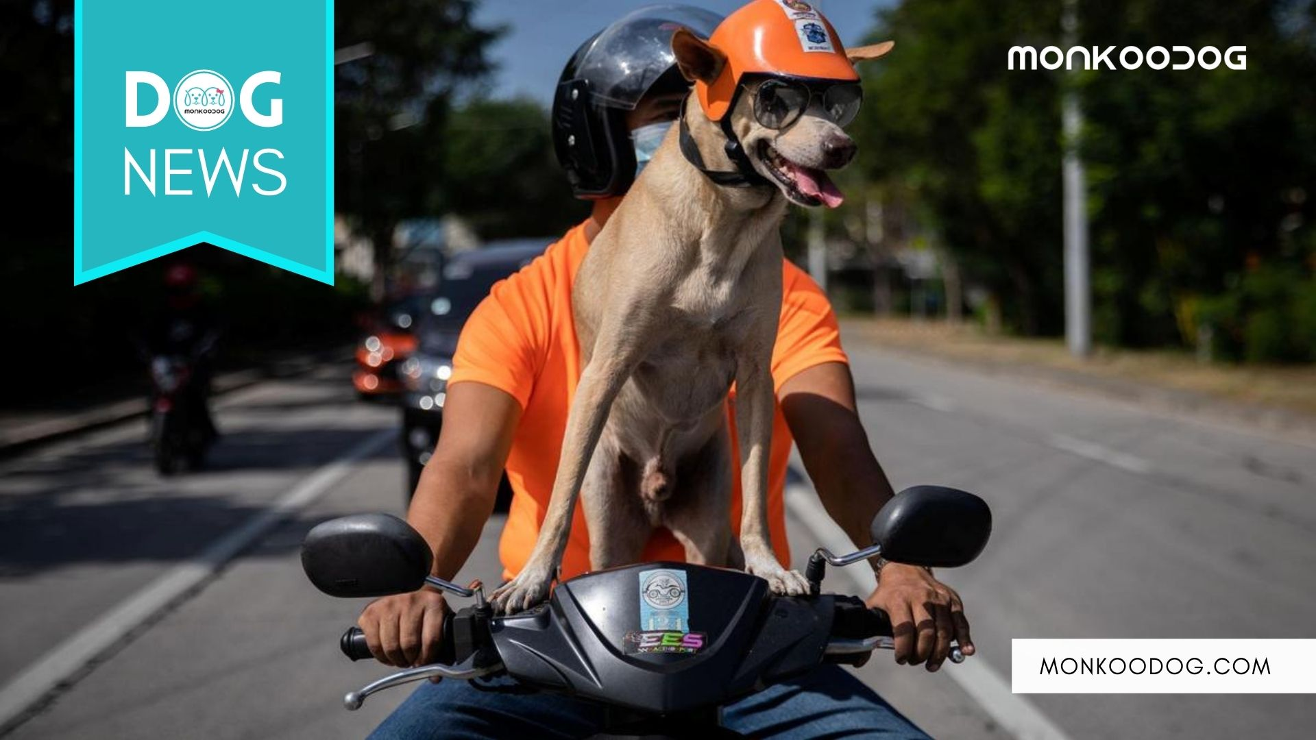 In The New Era of Sport Dogs, Meet Bogie The Biker Dog