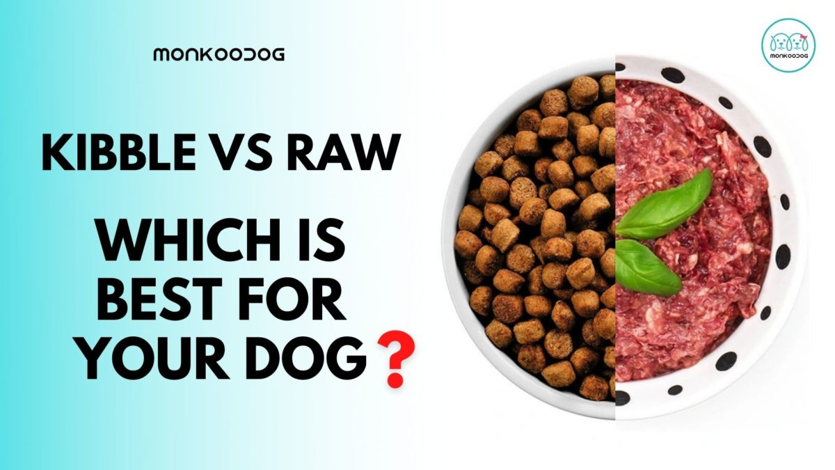 Raw Diet or Kibble: Which is Best for Your Dog