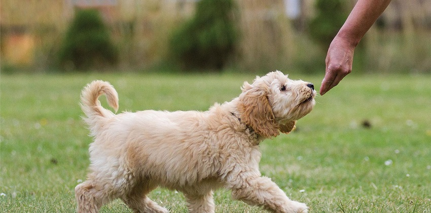 Learn and start training your dog