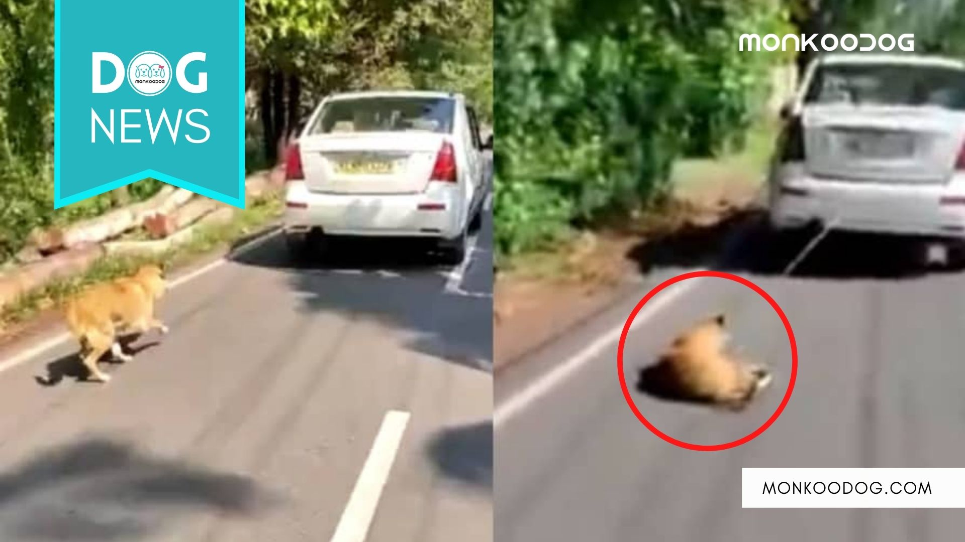 Man Arrested In Kochi For Dragging His Pet Dog Tied Behind His Car