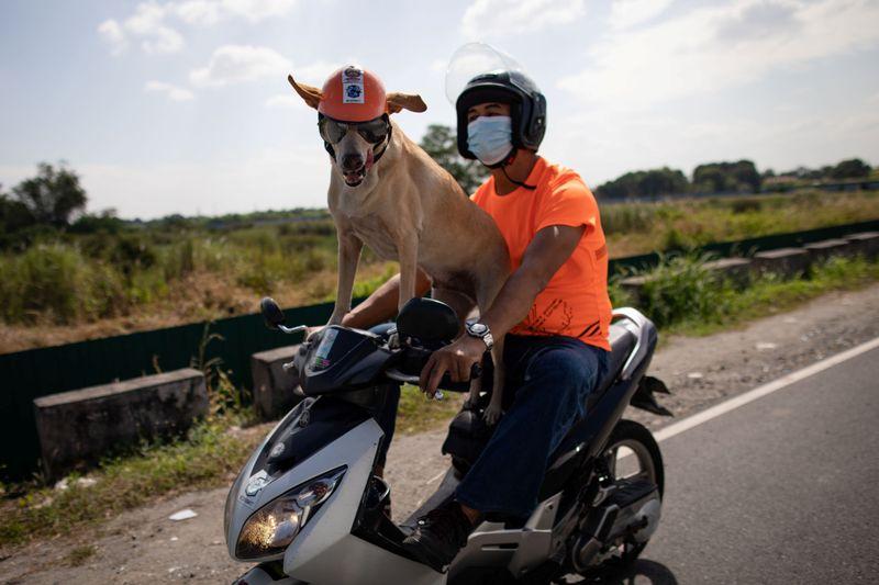 Meet Bogie the Biker dog