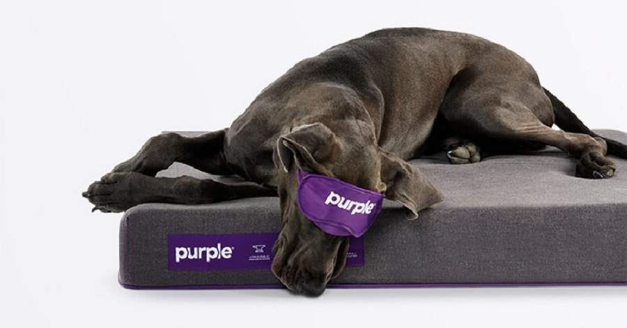 Purple Pet Bed