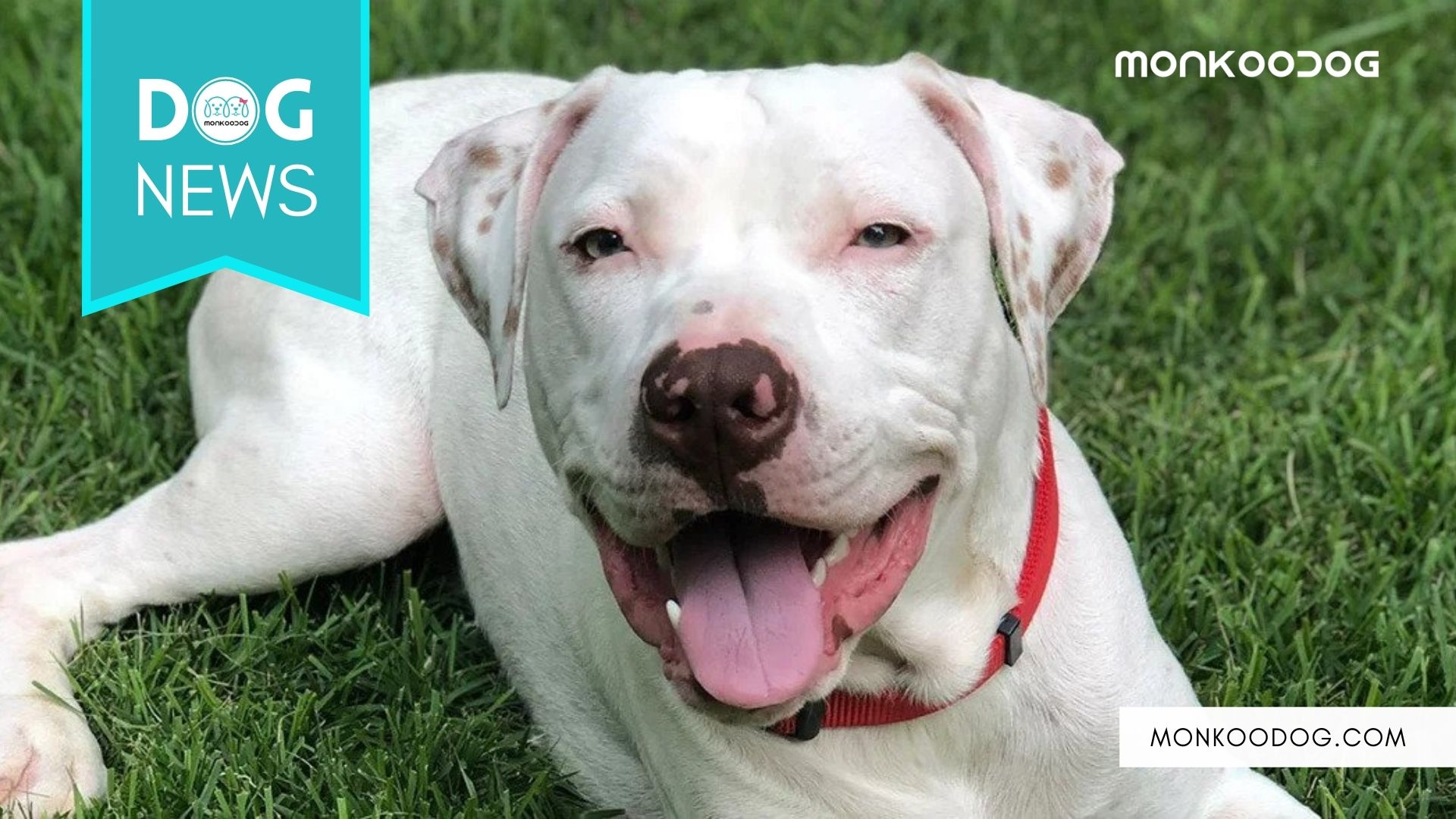 Sailor the Deaf Dog Has Found A New Home. A Speech Pathologist Who Is Learning Commands in Sign Language.