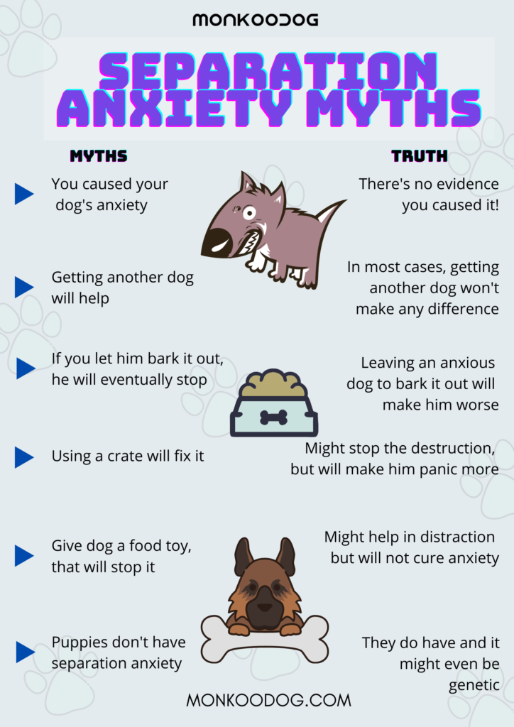 Separation Anxiety Myths
