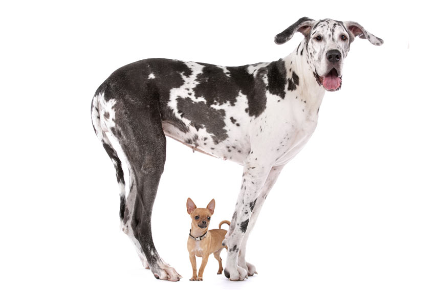 Size of your dog