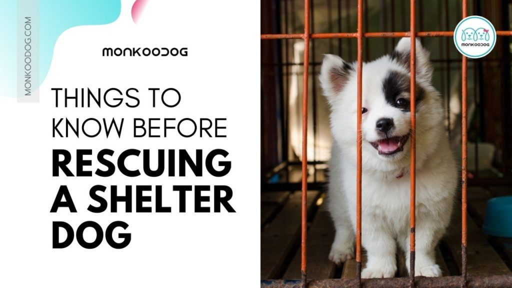 Things To Know Before Rescuing a Shelter Dog