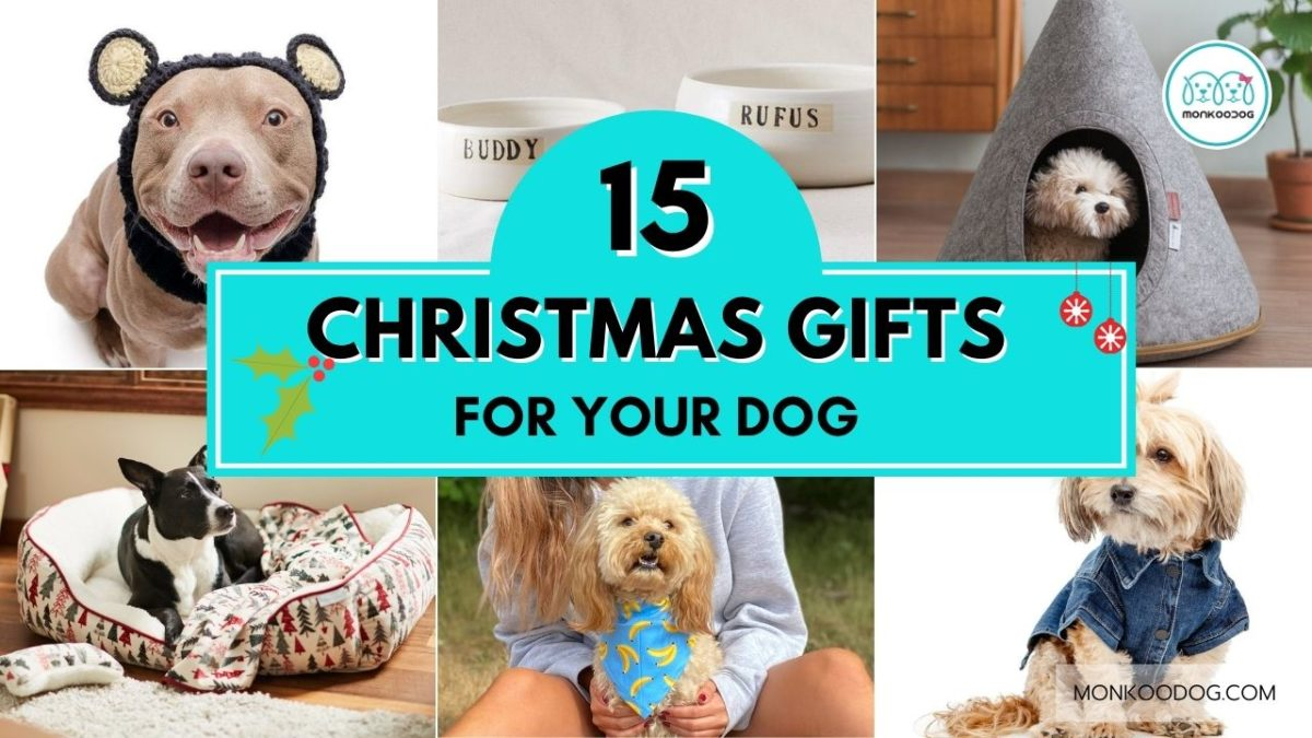 Top 15 Gift Ideas For Your Pooch This Christmas