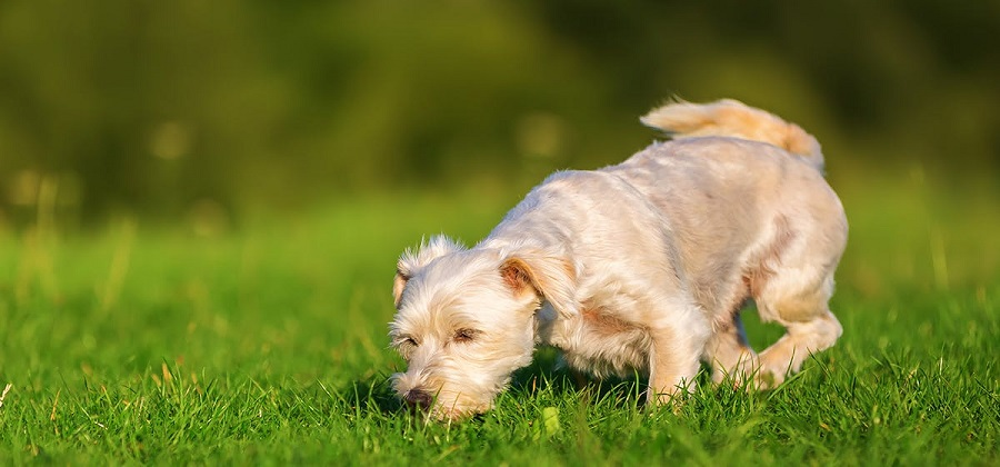 can dogs smell poison science