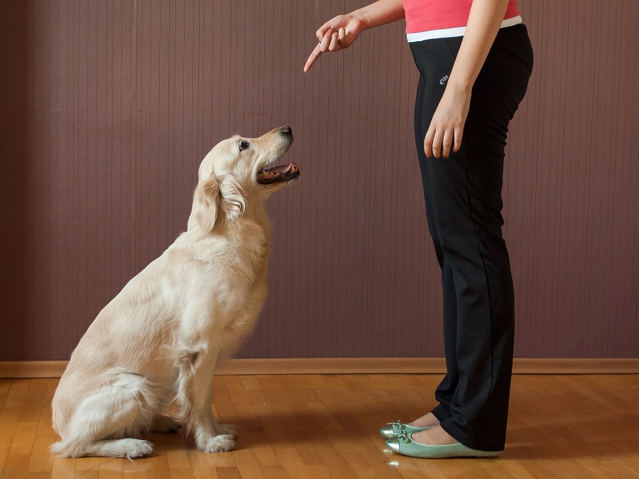 how-to-teach-your-dog-to-sit