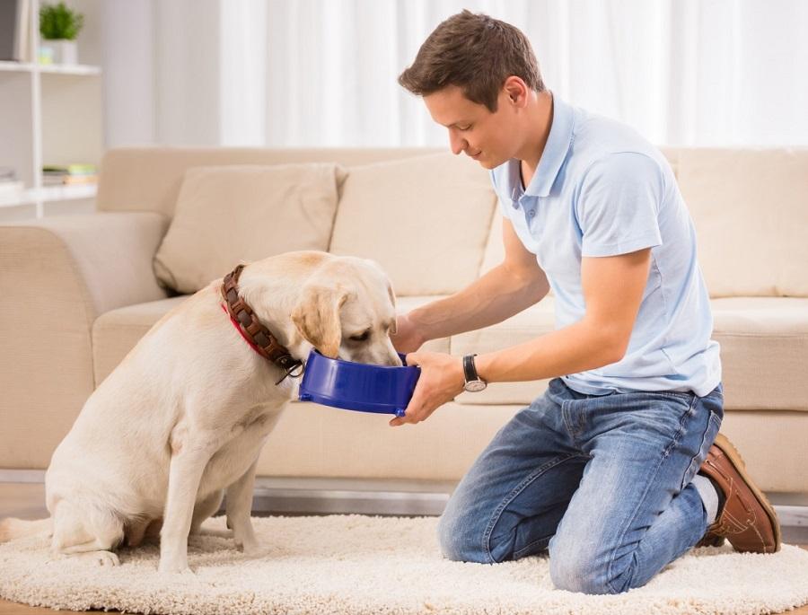 pets feeding dog