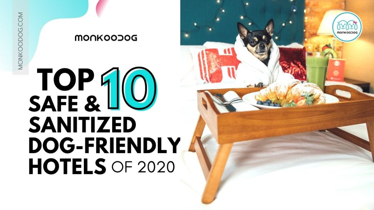 Top 10 dog-friendly hotels in the USA that you can go visit after the Covid-19 pandemic is over