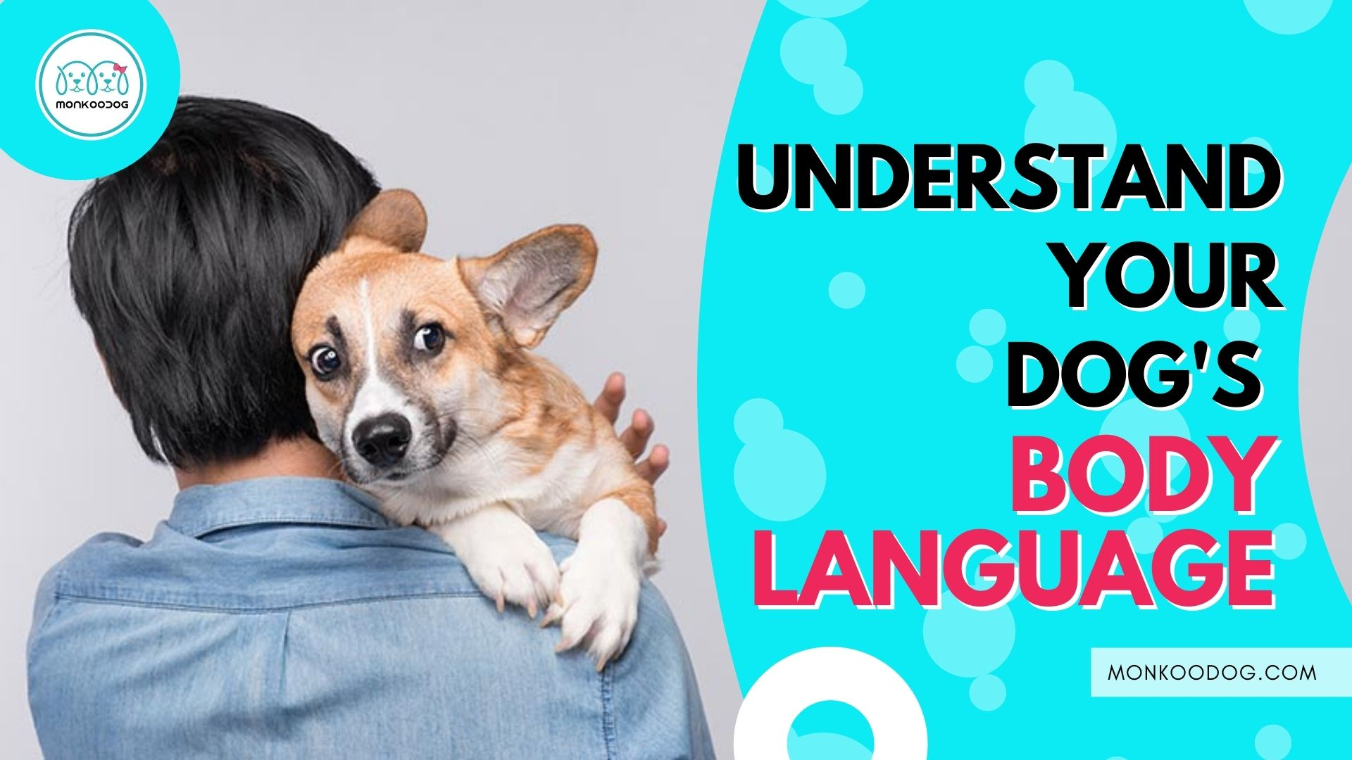 How to Understand Your Dog's Body Language
