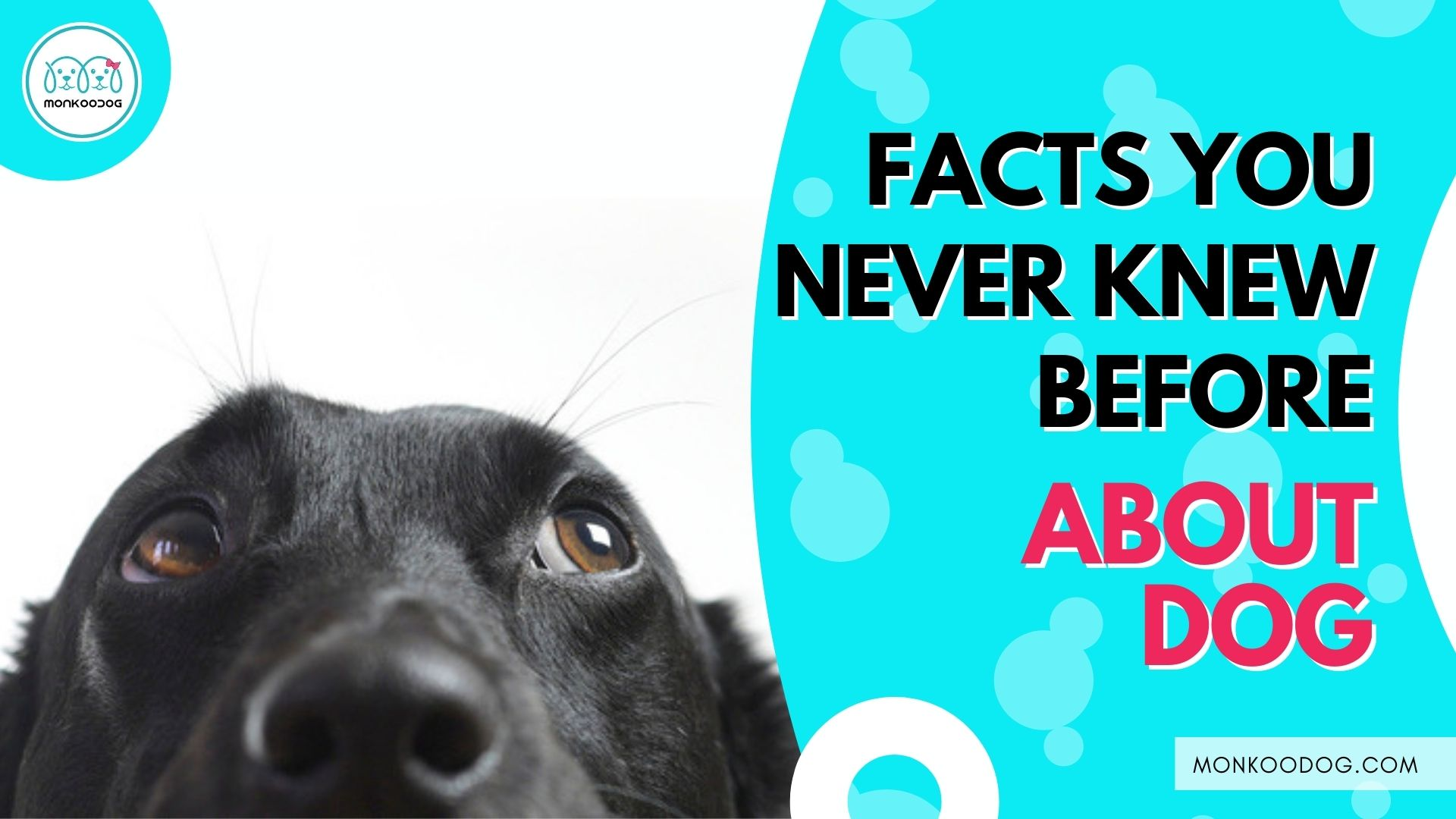 Amazing fun facts about dogs you never knew before