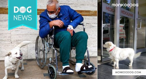 Boncuk, The Small Dog Waits For Its Sick Owner Outside The Hospital For 6 Days