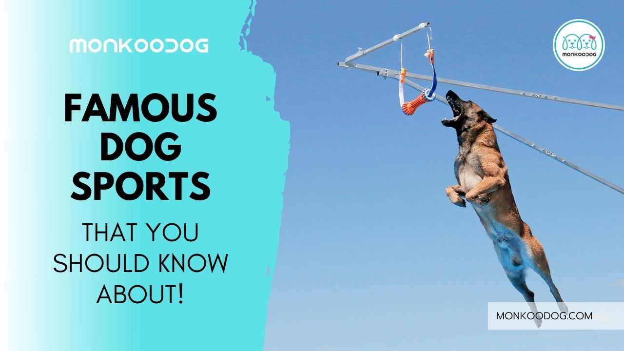 Famous Dog Sports That You Might Never Know Before