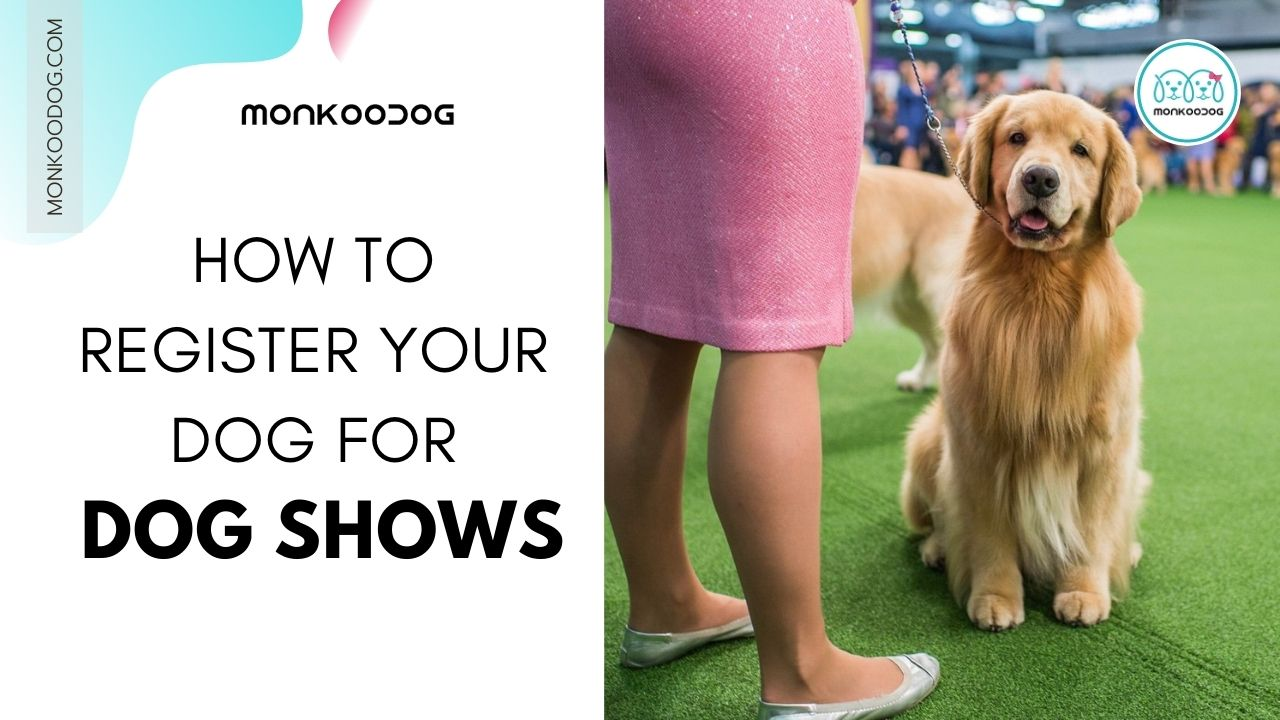 How To Register Your Dog For Dog Shows