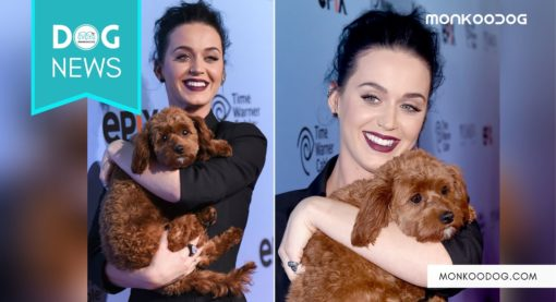 Katy Perry in news for converting to veganism with her beloved dog Nugget