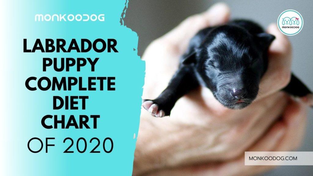 Labrador Puppy Complete Diet Chart
