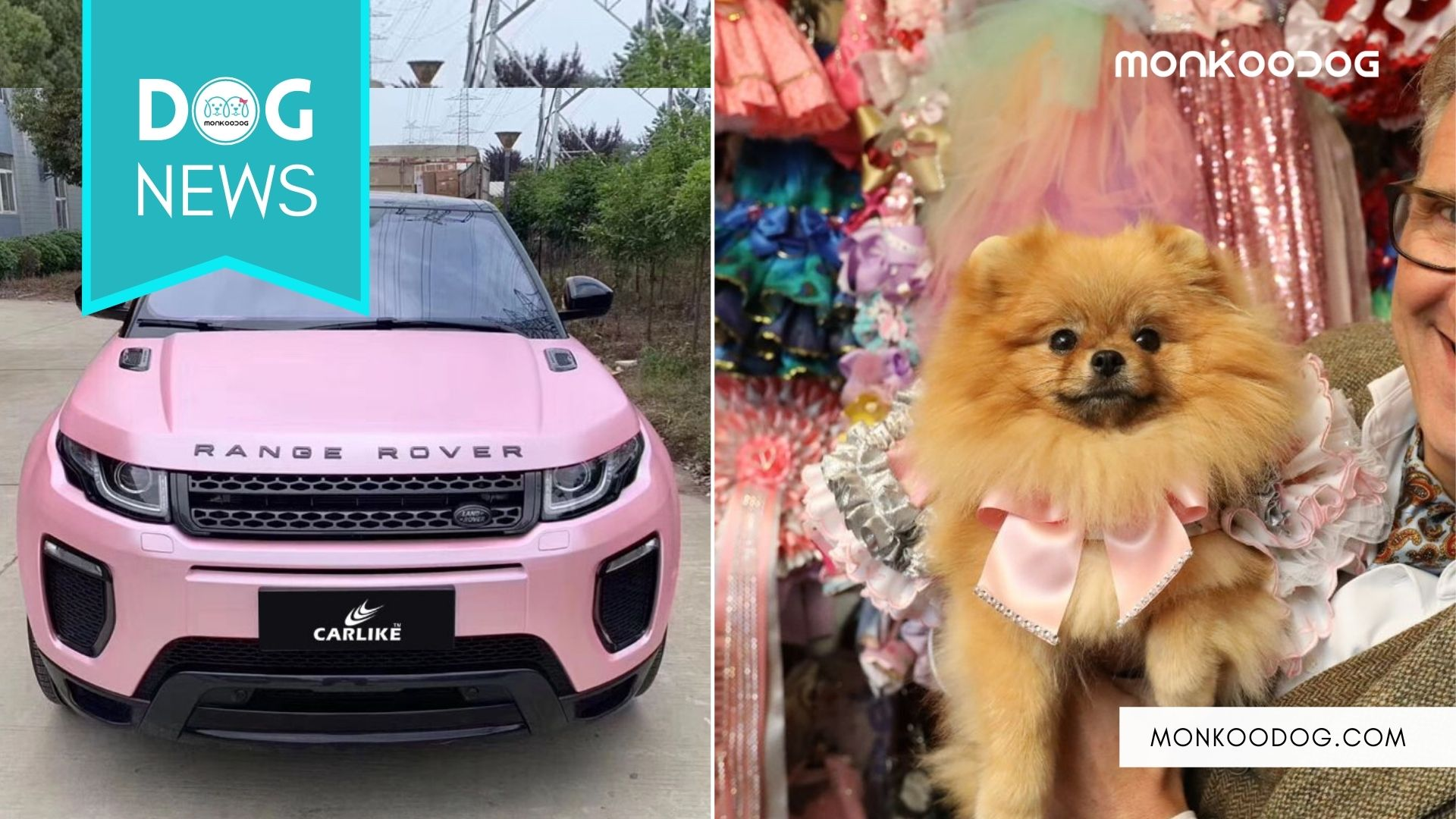 Meet The World's Most Pampered Pomeranian - Tallulah Who Owns A Pink Range Rover. (1)