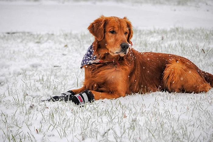 Neoprene Paw Protector Dog Boots