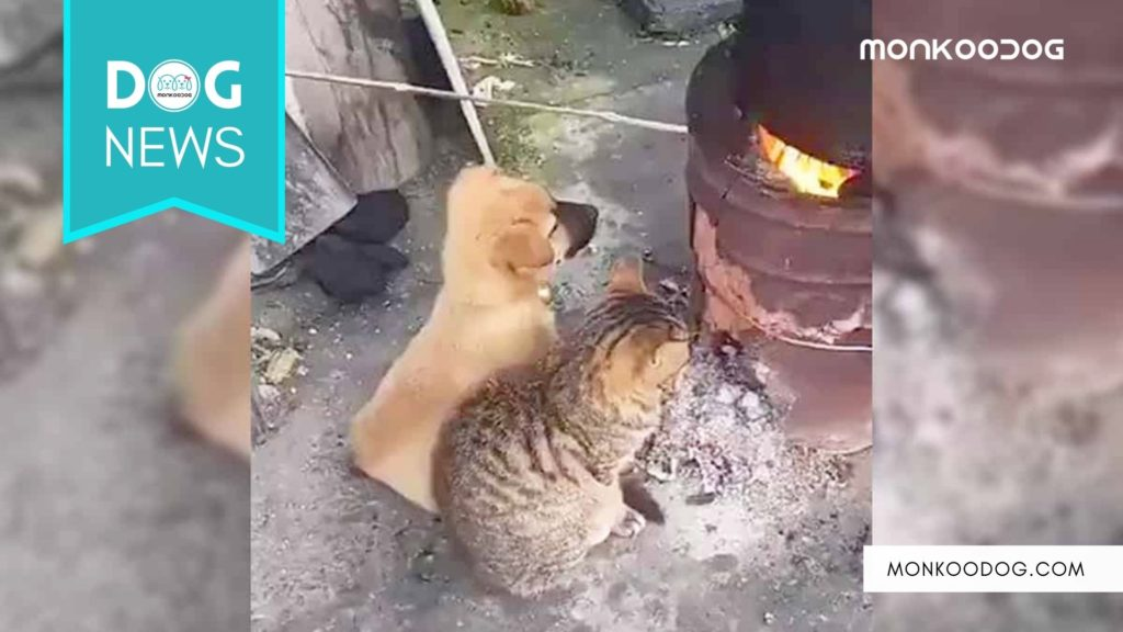 Viral Video of Puppy and kitten sharing a cozy winter fire for warmth is a true emotional watch