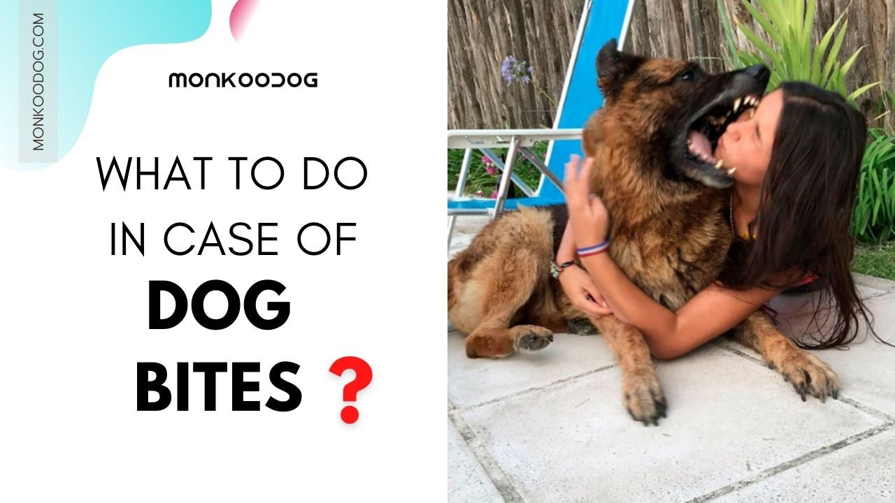 WHAT TO DO IN CASE OF DOG BITES